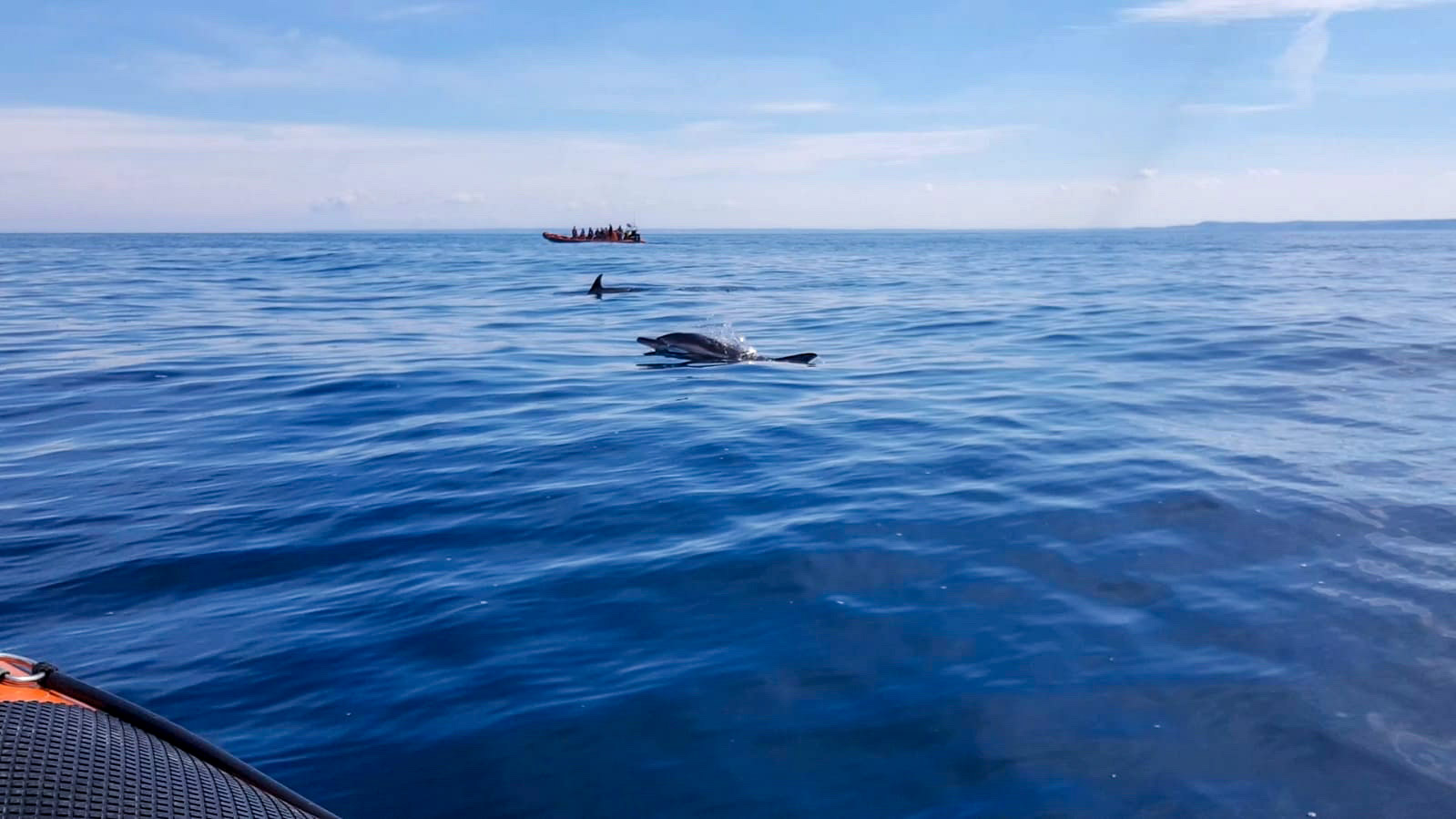 dolphin spotted on padstow sealife safari