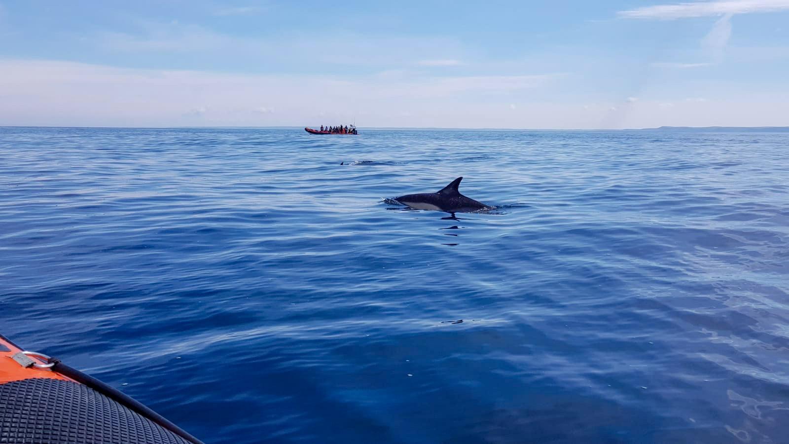 Padstow sealife safari dolphins